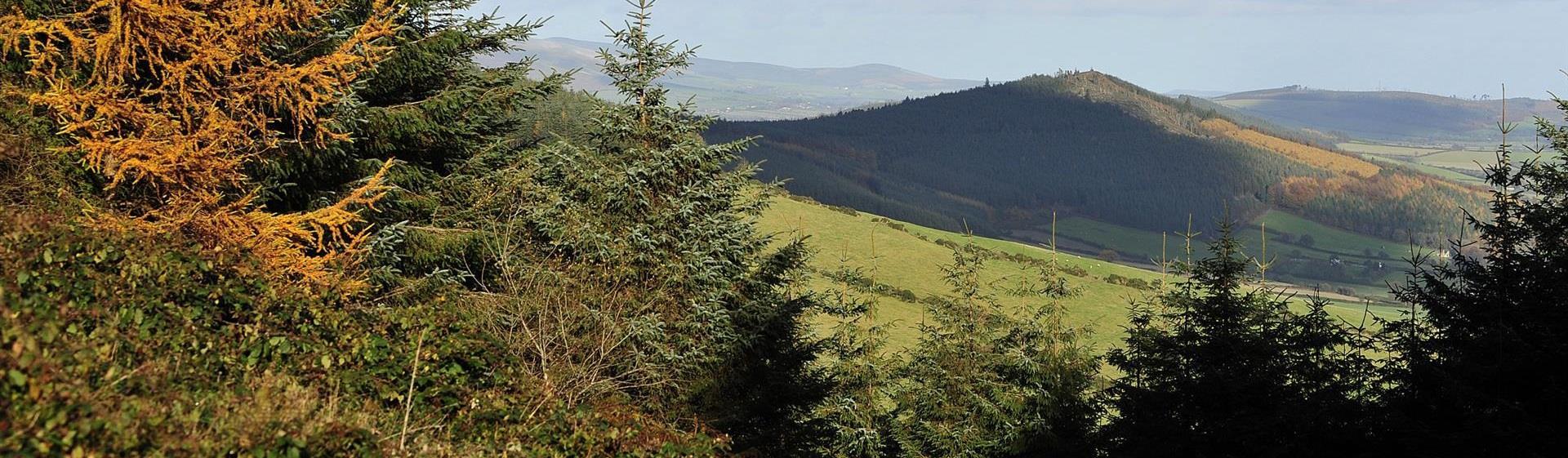 WWT_Askamore - Wexford Walking Trail