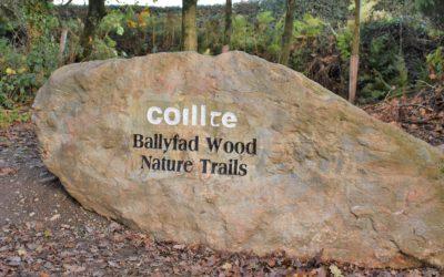 Wexford Springtime Walk in Ballyfad Woods