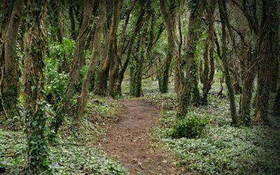 Wexford Summer Walk In Courtown Woodland