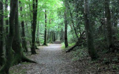 Summer Walk Kelly's Wood New Ross