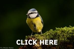 Askamore Fauna
