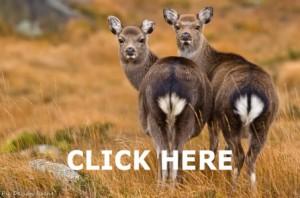 Animals on Wexford Walking Trail