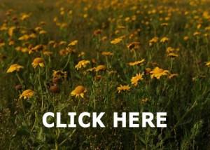 Ferns Flora