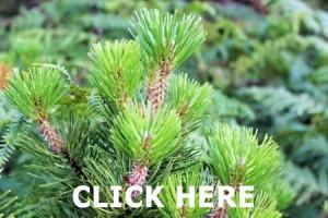 Trees & Shrubs on Wexford Walking Trail