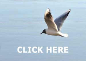 Sea Birds on Wexford Walking Trail